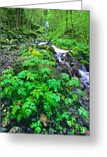 Wahkeena Falls In The Columbia River Gorge Greeting Card