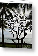 Waikiki Beach Hawaii Usa Greeting Card