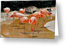 Waikiki Flamingos Greeting Card