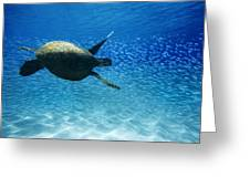 Waimea Turtle Greeting Card