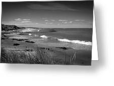 Waipapa Beach New Zealand Greeting Card