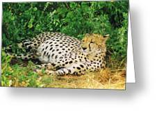 Waiting For Baby Cheetahs Greeting Card