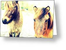 Eager Horses Waiting For Their Simple Dinner Greeting Card