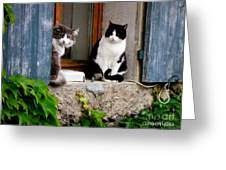 Waiting For Dinner Greeting Card by Lainie Wrightson