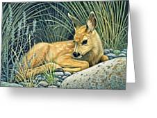 Waiting For Mom-mule Deer Fawn Greeting Card