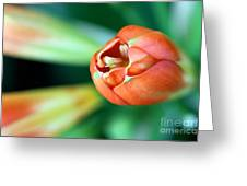 Waiting To Bloom Greeting Card