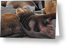 Wake Me When The Herring Arrive Greeting Card by Randy Hall