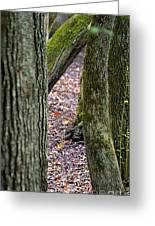 Walk Among The Trees Greeting Card