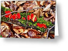 Walk In The Woods Greeting Card