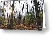 Walk In The Woods2 Greeting Card