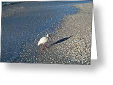 Walk Like An Ibis Greeting Card
