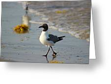 Walk On The Beach Greeting Card by Candice Trimble