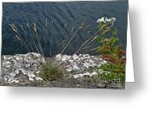Flowers In Rock Greeting Card