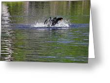 Walk On Water - The Anhinga Greeting Card by Christine Till