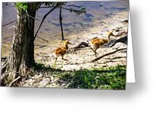 Walking Around The Lake Greeting Card