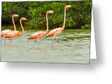 Walking Flamingos Greeting Card