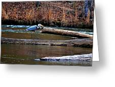 Walking Heron Greeting Card