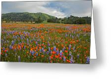 Walking In The Wildflowers Greeting Card