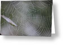 Walking Into Spiderwebs Greeting Card
