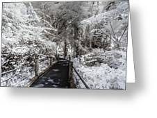 Walking Into The Infrared Jungle 1 Greeting Card