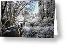 Walking Into The Infrared Jungle 2 Greeting Card