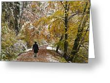 Walking Into Winter - Beautiful Autumnal Trees And The First Snow Of The Year Greeting Card by Matthias Hauser