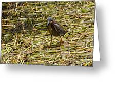 Walking On The Reeds Greeting Card