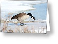 Walking On The Snow Greeting Card