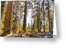 Walking Small In The Tall Forest Greeting Card