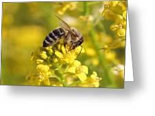 Wall Flower Pollen Greeting Card