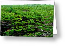 Wall Of Ivy Greeting Card