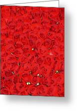 Wall Of Red Roses Greeting Card