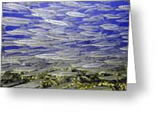Wall Of Silver Fish Greeting Card