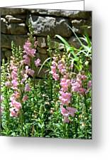 Wall Of Snapdragons Greeting Card