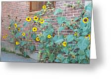 Wall Of Sunflowers 1 Greeting Card