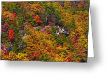 Wall Of Trees Greeting Card