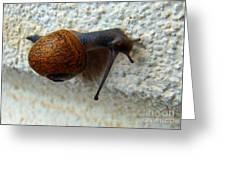 Wall Snail 1 Greeting Card