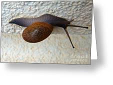 Wall Snail 2 Greeting Card