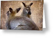 Wallabies Greeting Card