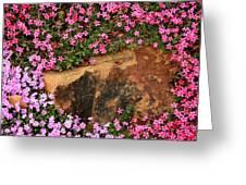 Wallflowers 3 Greeting Card