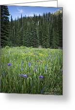 Wallowa Wildflowers Greeting Card