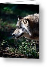 Wandering Wolf Greeting Card