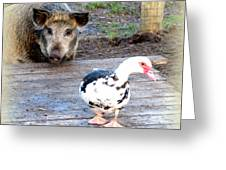 The Pig Want To Be Your Friend, Mr Duck  Greeting Card