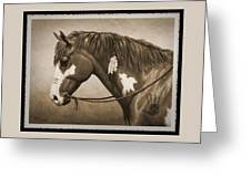 War Horse Old Photo Fx Greeting Card by Crista Forest