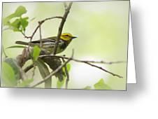 Warbler - Black-throated Green  Greeting Card