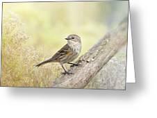 Warbler In Morning Light Greeting Card