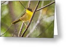 Warbler In Sunlight Greeting Card