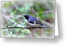 Warbler With Lunch Greeting Card