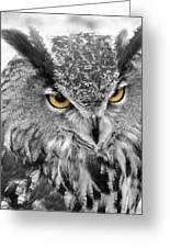 Watching You Owl Greeting Card