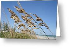 Warm Breeze Blowing Greeting Card
